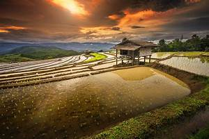 rice Paddy, Terraces, Hut, Sunrise, Water, Clouds, Hill ...