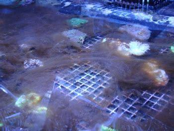 Section: Algae (Brown): Group: Brown-Slime Algae: Species