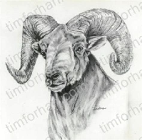 animal prints wall art pencil drawings page