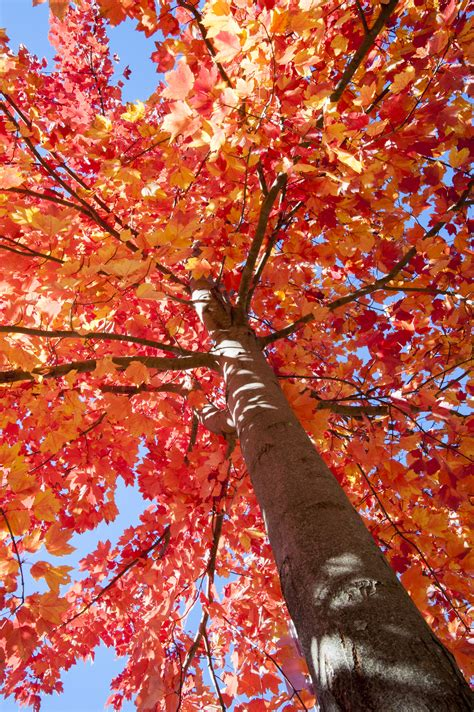 Climate Change Could Affect Fall Foliage Timing Uconn Today