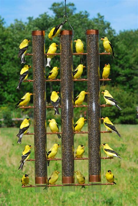 yellow finch bird house plans