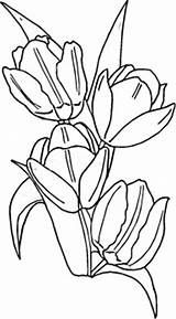 Coloring Tulips Peony Blooming Netherland sketch template