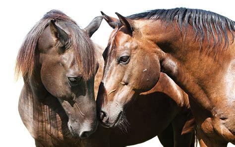 horse emotional bond pbs