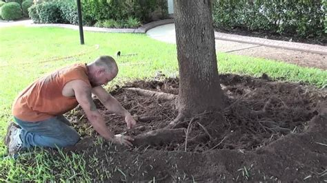tree service shreveport root pruning and girdled roots