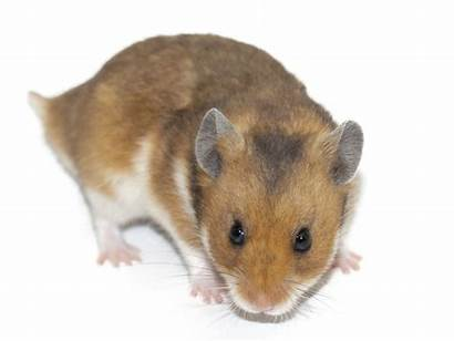 Hamster Names Female Picking Complete Guide