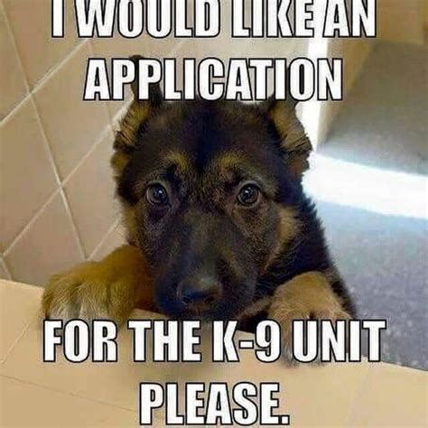 Funny Pet Memes - dog application for k9 what breed is it