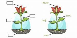 Foundation Plant Clipart