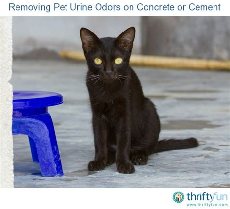 removing pet urine odors on concrete or cement thriftyfun