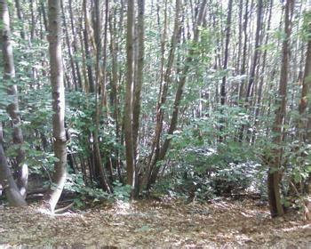 immobiliers offres parcelles de bois a vendre dans l oise