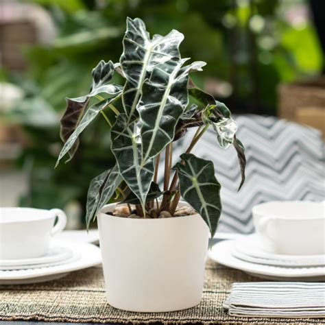 A wide range of international property to buy in south africa with primelocation. Indoor Plants + Floral Shop | West Coast Gardens, South Surrey, BC