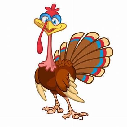 Turkey Feathers Vector Thanksgiving Clipart Clip Cartoon