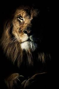 Best 25+ Fierce animals ideas on Pinterest   World wild ...