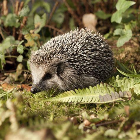 hedgehog concept strategy skills training