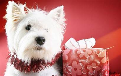 Christmas Dog Desktop Animal Puppy Widescreen Animals
