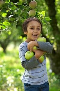 Wann äpfel Ernten : pfel ernten wann womit ~ Lizthompson.info Haus und Dekorationen