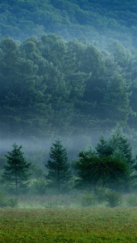 hd background foggy forest fog layers green trees grass wallpaper wallpapersbyte