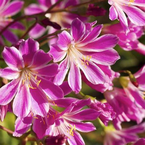 plante grasse fleurie liste ooreka