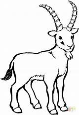 Coloring Pages Goat Mountain Goats Getdrawings sketch template