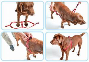How To - Fit A Rogz Harness
