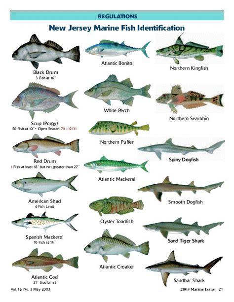 fish names marine fish with names cars with fish names 2017 fish tank maintenance
