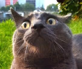 hilarious cats cats part 9 52 pics amazing creatures
