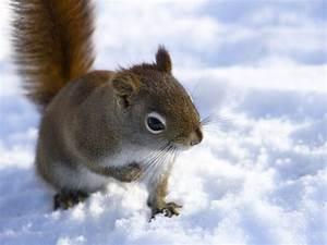 Lovely Animals (Album 27) | Animal Photo  Animal