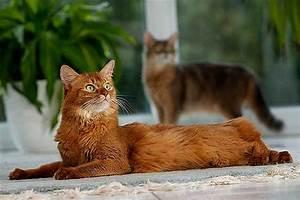 Verkleidung Für Katzen : katzen f r allergiker katzenallergie was tun ~ Frokenaadalensverden.com Haus und Dekorationen