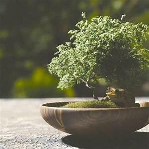 Bonsai Pflege Für Anfänger : blog floraqueen deutschland ~ Frokenaadalensverden.com Haus und Dekorationen