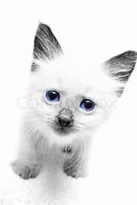 Cute little black and white kitten with blue eyes | Stock ...