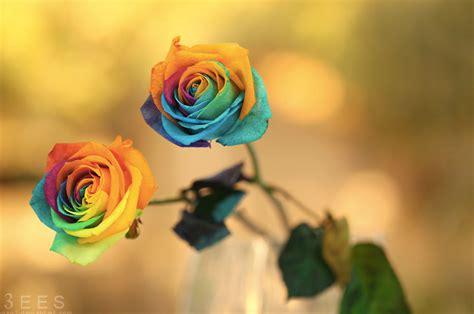 Takut Akan Hamil Foto Ini Dia Mawar Pelangi Yang Sangat Cantik Dan Bisa