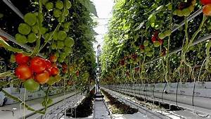 Tunnel farming business plan