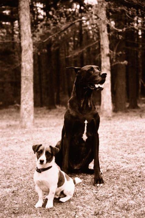 long   bleeding phase   dogs  heat