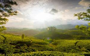 Munnar Hills India, HD World, 4k Wallpapers, Images ...