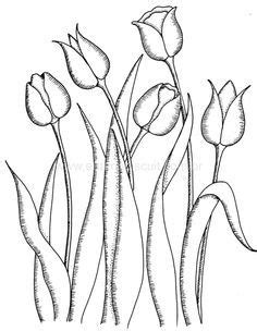 tulip drawing - Google Search | Water Colour Paint