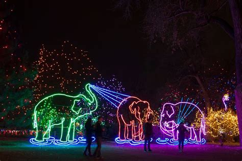 brew lights at zoo lights zoo lights 2017 preview weekend denver zoo denver