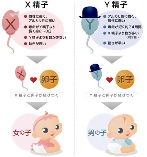 子供 産み 分け 方法