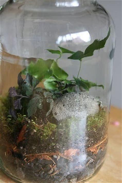 terrarium indoor ecosystem     terrarium