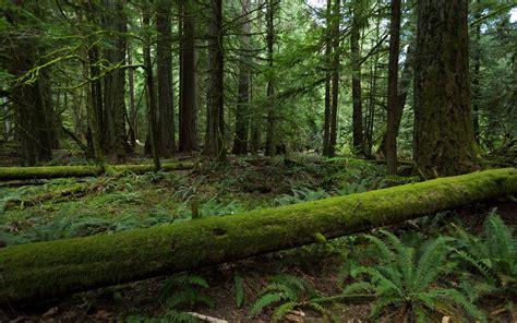 forest wallpaper moss green - HD Desktop Wallpapers   4k HD