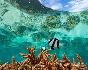 Fishbowl Lagoon : Ofu, American Samoa : Art in Nature ...