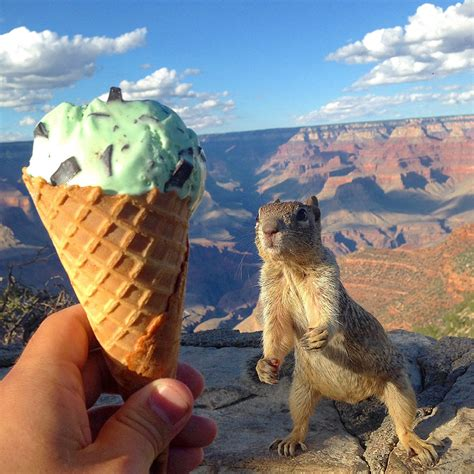 squirrel reaching  mint chocolate chip ice cream cone