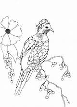 Pigeon Colouring Coloring Fancy Berries sketch template
