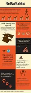 Dog Walking Facts