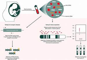 The Blood Plasma Of A Pregnant Woman Contains Fetal Cfdna