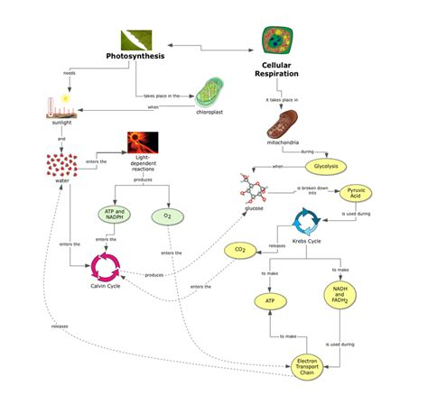 Life Science Concept Map Photosynthesis And Cellular