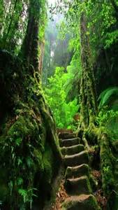 Fern Forest Path