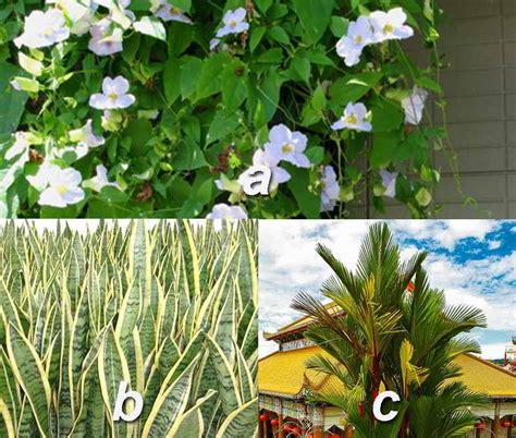 jenis tanaman hias tahan panas matahari hujan