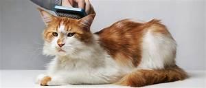 Comment Couper Les Poils Sous Les Pattes De Votre Chat