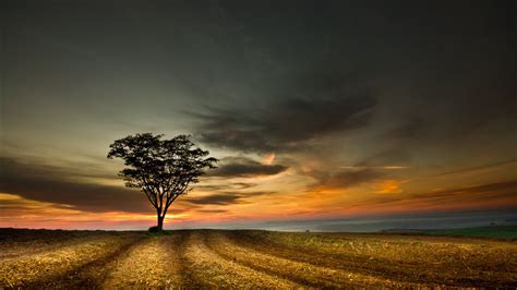 4k Lonely Tree Wallpapers High Quality