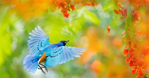 flying bird  africa  ultra hd wallpaper high quality