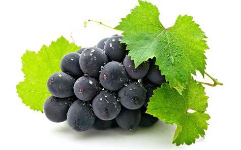 Grapes Fruit Photo 34914700 Fanpop
